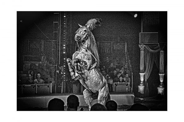 Luminance 2016_Patrice KESSOURI_Le cirque_6