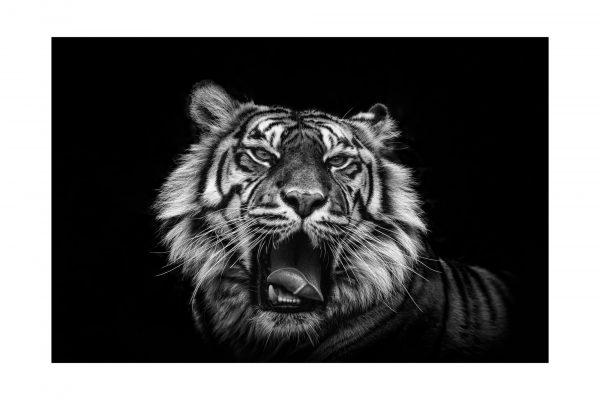 Luminance 2017_Éric SCHWARTZ_Du noir & du blanc_5