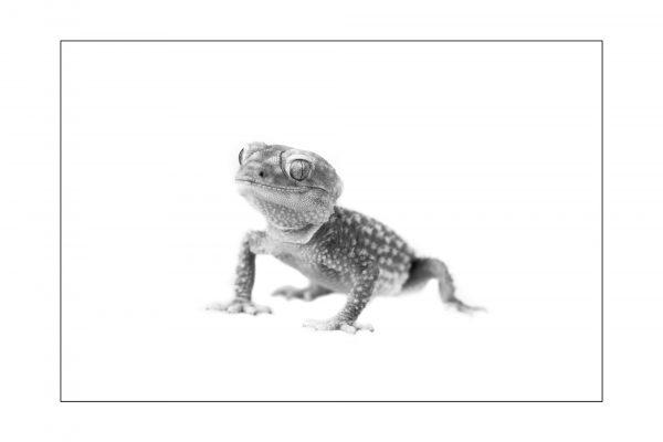 Luminance 2017_Mathieu THIEBAUT_Reptiles en N&B_1