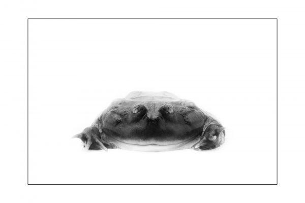 Luminance 2017_Mathieu THIEBAUT_Reptiles en N&B_4