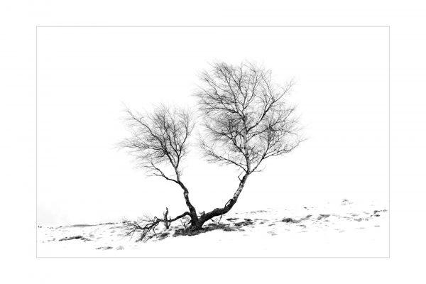 Luminance 2018_Patrick ROUSCHMEYER_Épures hivernales_3