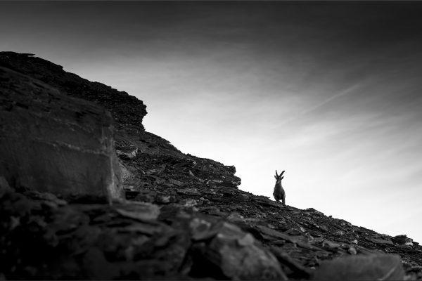 Luminance 2021_Patrick ROUSCHMEYER_Ligne de crête_039_2_A
