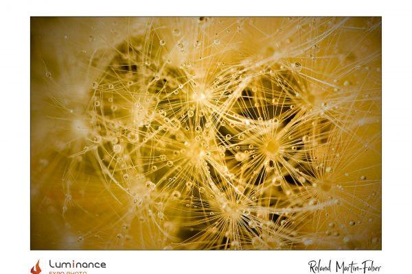 Luminance 2021_Roland MARTIN-FABER_La mal-aimée_B_003_1_A