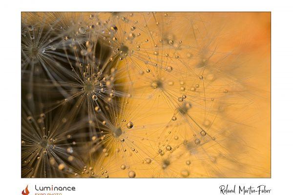 Luminance 2021_Roland MARTIN-FABER_La mal-aimée_B_003_2_A