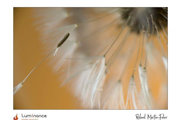 Luminance 2021_Roland MARTIN-FABER_La mal-aimée_B_003_4_A